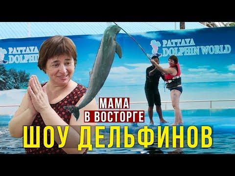 Мама плавает с Дельфином — Мечта СБЫЛАСЬ, Шоколадница, Ресторан на море