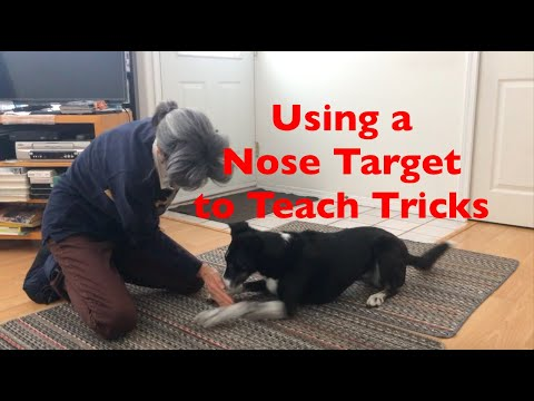 Using a Nose Target to Teach 15 Tricks! For Freestyle, Therapy Dogs and Fun!