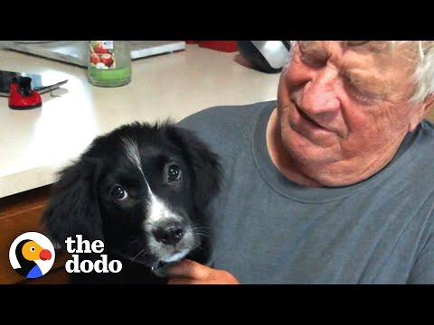 Widowed Husband Gets The Cutest Surprise | The Dodo Soulmates