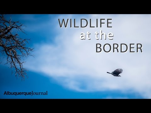 Wildlife at the Border