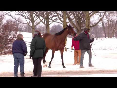 2017 Keeneland January Sale Preview