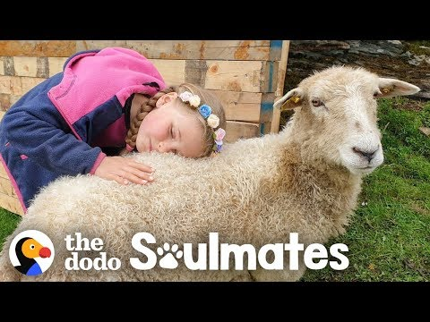 Girl And Her Sheep Have The Most Perfect Friendship   The Dodo