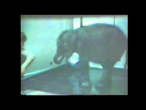 Kala - 30 let od příchodu do naší zoo: v Ústí nad Labem