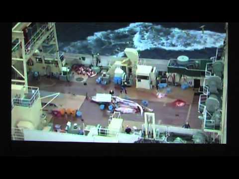 RTL2 - WDSF begrüßt Urteil gegen japanische Walfänger