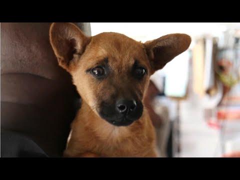 Mobile Haustierklinik in Südafrika: Tierschutz in der größten Township Kapstadts