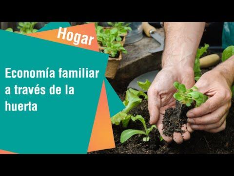 Beneficios económicos de una huerta en casa   Hogar