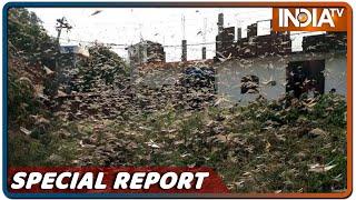 Special Report: पाकिस्तानी टिड्डी से दिल्ली कितने दिन के लिए बची? - INDIATV