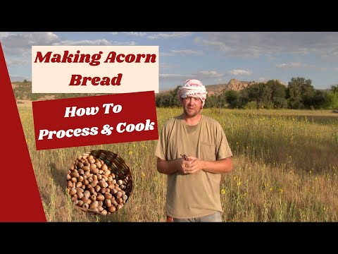 Making and Cooking Acorn Bread!