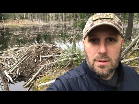 Nature Hike: Dead Turtle, Starting Fire, Beaver Lodge, No Fish - Rough Cut, Video 1