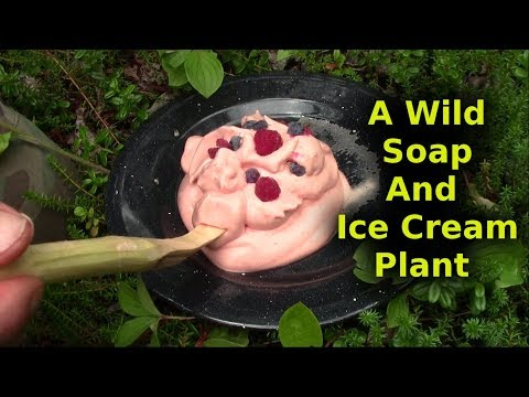 Bushcrafted Soap And Ice Cream From Same Plant