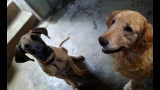 El cuidado de las mascotas durante la quema de pirotecnia