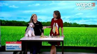 Una mirada a lo positivo: Microempresa de artículos para mascotas