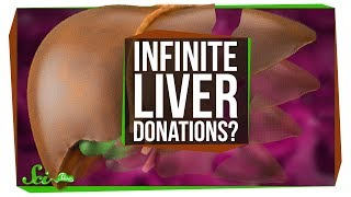 Can You Keep Donating and Regrowing Your Liver?