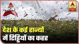Locust attack: Various states affected severely | ABP Special - ABPNEWSTV