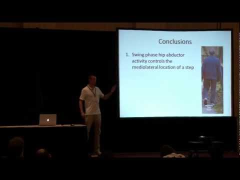 A foot placement strategy for the active control of gait stability