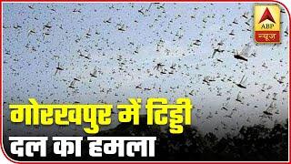 Locust attack in UP's Gorakhpur - ABPNEWSTV
