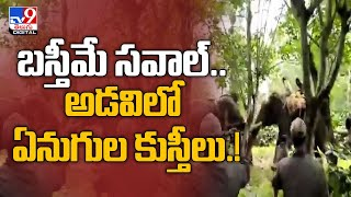 Viral Video : Trained Elephant Controls Rogue Wild Tusker In A Nail-Biting Tussle - TV9 - TV9