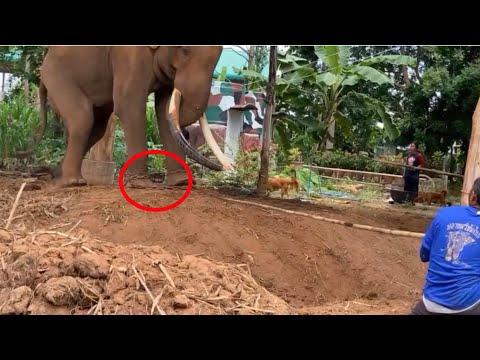 ระทึก⚠️ภารกิจ-เช็คโซ่!!-ช้างตก