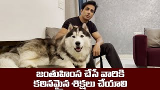 Sonu Sood Appeals Strong punishment for Animal Cruelty - IGTELUGU