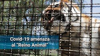 "Pandemia también amenaza al ""Reino Animal"""