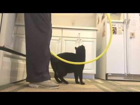 Cat Jumps Through a Hoop! Plus more tricks.