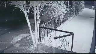 شاهد كيف تمكن نمر من خطف كلب نائم أمام منزل صاحبه