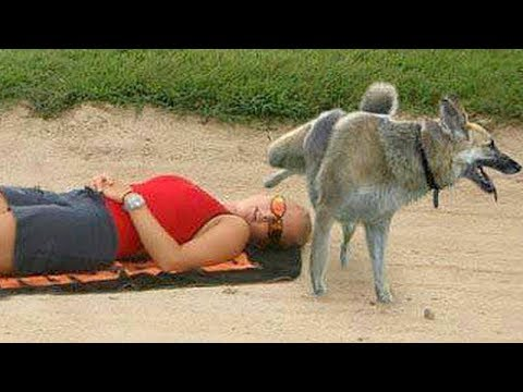 connectYoutube - FUNNY ANIMALS on the BEACH, this is FUNNIER THAN WATCHING CATS! - Funny ANIMAL compilation
