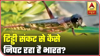 Locust attack from Pakistan: Watch how India is dealing with the problem - ABPNEWSTV