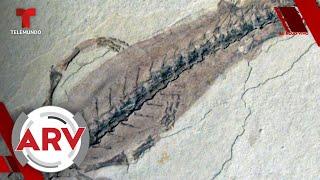 Antepasados de los humanos: Así caminaron por primera vez en la tierra   Al Rojo Vivo   Telemundo