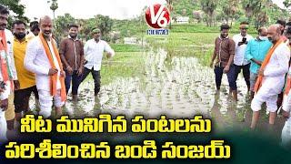 BJP Chief Bandi Sanjay Inspects Flood Affected Crops In Manakondur   V6 News - V6NEWSTELUGU