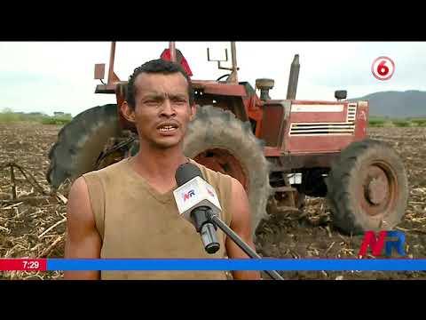 Productores de arroz comenzaron a preparar los suelos para nueva siembre en Bagaces