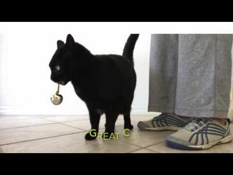 Cat Tricks using Greenies as Treats