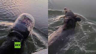 Salvan a un oso que nadaba en un lago con la cabeza atrapada en un contenedor plástico
