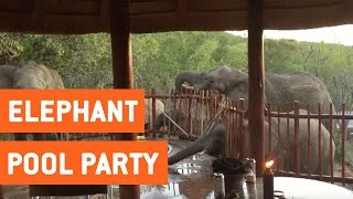 Elephants Crash Family's Pool Party
