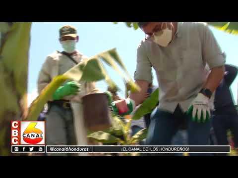 Entregan bono bananero a productores en el norte del país