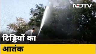 जारी है टिड्डी दलों का हमला, छह राज्यों में मचाया आतंक - NDTVINDIA