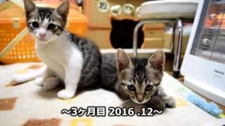 子猫 6ヶ月『子猫を保護して6ヶ月間のまとめ』などなど