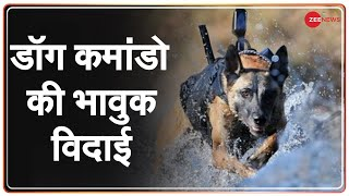 CISF के Dog Commando का विदाई समारोह- भावुक हुए हैंडलर्स | Super Dogs | Retirement | Hindi News - ZEENEWS