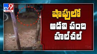 Telangana : తానూర్ బస్టాండ్ సమీపంలో అడవి పంది హుల్ చల్ -  TV9 - TV9