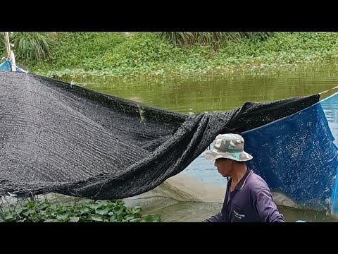 จับปลาขาย