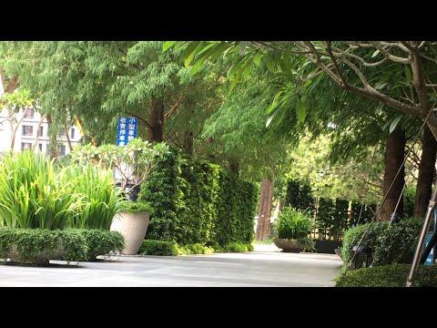 花園--การจัดสวนหน้าตึกที่พักของไ