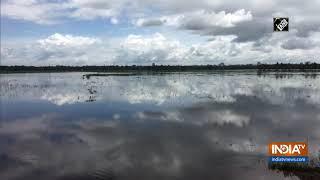 Paddy fields flooded in Kottayam following heavy rainfall - INDIATV