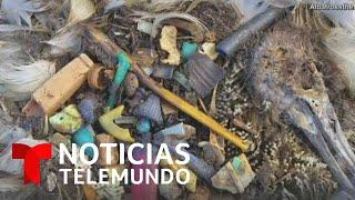 Un mar de plásticos causa la muerte de animales y amenaza nuestra salud   Noticias Telemundo