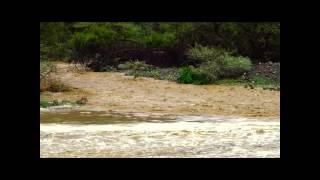فيديو:سيول الباحة
