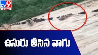 మూగ జీవాల ఉసురు తీసిన వాగు! - TV9 - TV9