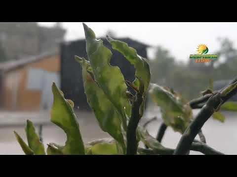 Rica Lluvia en San Juan de la Maguana