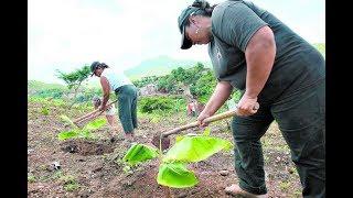 Mujeres rurales están teniendo problemas para cultivar