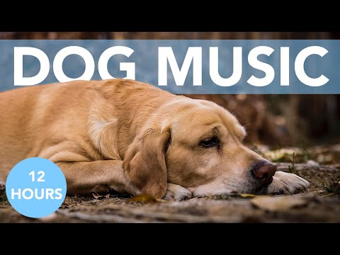 12 HOURS of Deep Relaxing Music for Dogs + Soothing Visuals!