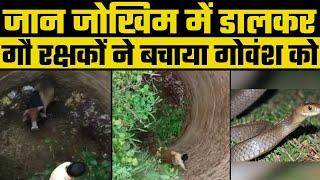 Rajasthan : गौ रक्षकों ने अपनी जान जोखिम में डालकर गहरे कुएं से गोवंश को बाहर निकाला - ITVNEWSINDIA