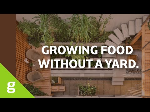 How to grow food when you have no yard